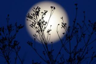 Фото: лунный календарь на июль
