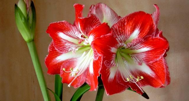 Какие цветы исполняют желания?