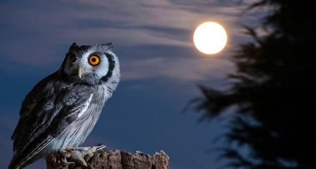 Ночной образ жизни — хорошо это или плохо