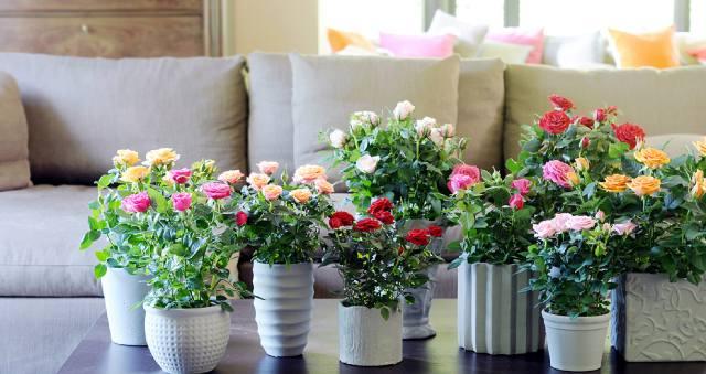 Какие домашние цветы лучше держать для семейного благополучия?