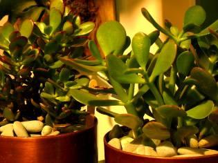 Фото: зачем дома держать растения?