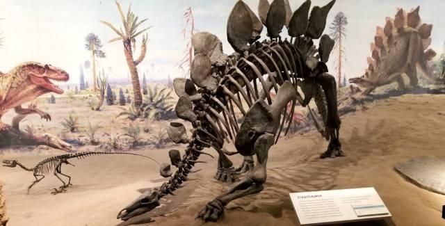Драмхеллер: Музей динозавров