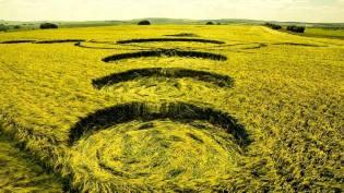 Фото: круги на полях — расшифровка
