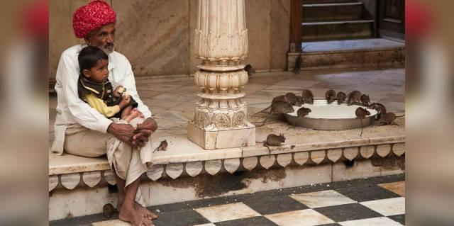 Богиня Карни Мата: Храм священных крыс