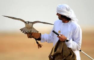 Фото: соколиная охота арабских шейхов