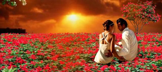 Цветы любви, чтобы вас любили вечно