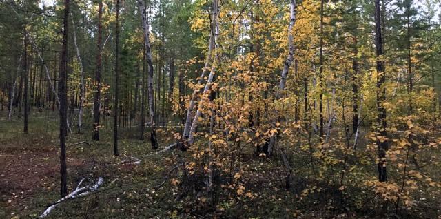 Маганский тракт: Аномальная зона Якутии