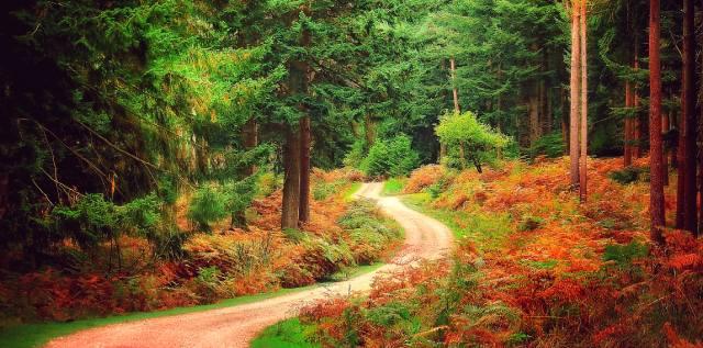 Проклятье королевского леса Нью-Форест