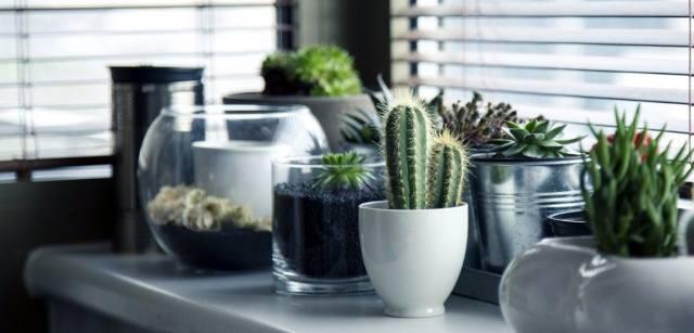 Талисманы-растения на работе
