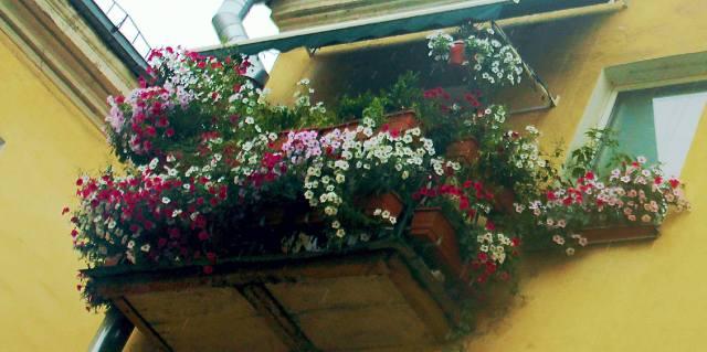 Какие цветы сажать на балконе?