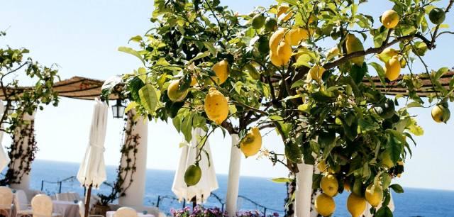 Лимонное дерево: Как привлечь богатство в дом