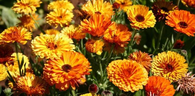 Растения здоровья, счастья, любви и благополучия