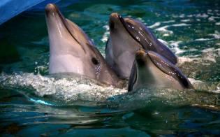 Фото: дельфины в легендах — интересные факты