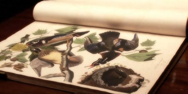 Кража книги Птицы Америки Джона Джеймса Одюбона