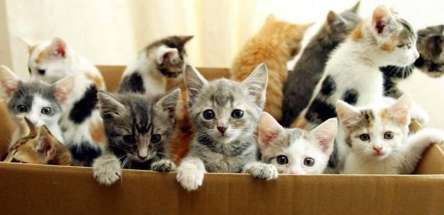 Как выбрать кошку по дате рождения?