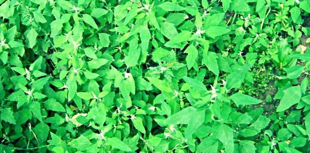 Как узнать о проблемах энергетики человека по растениям?