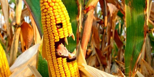 ГМО продукты — что это такое, вред или польза